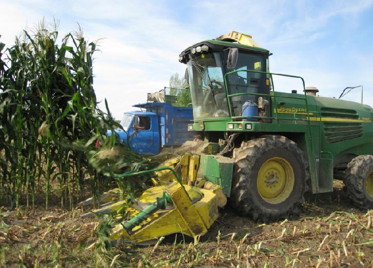 新疆兵团4800亩青贮玉米开镰收割