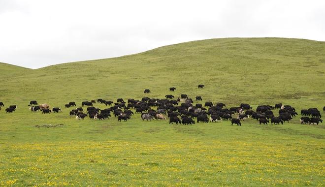农业部:全国草食畜牧业发展规划2016-2020年