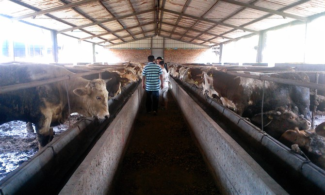 今年河南将新增5万头优质奶牛20万头优质肉牛