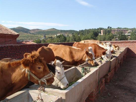 超越欧盟和巴西 中国将成为全球第2大牛肉消费