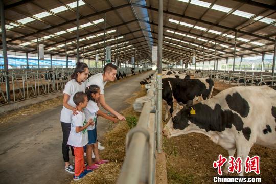 """内蒙古畜牧业转型升级 休闲观光牧场为""""中国乳"""