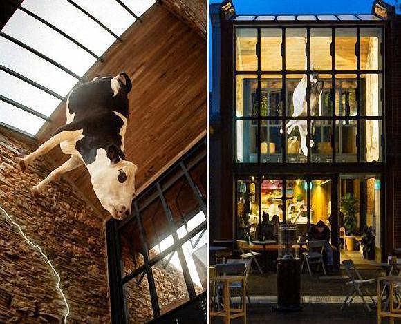 披萨店里倒吊着一头奶牛,引起网友不满要求撤下