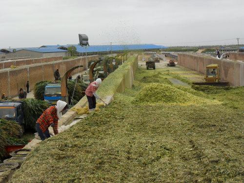 2017年工业饲料产量超2亿吨 产值超8000亿