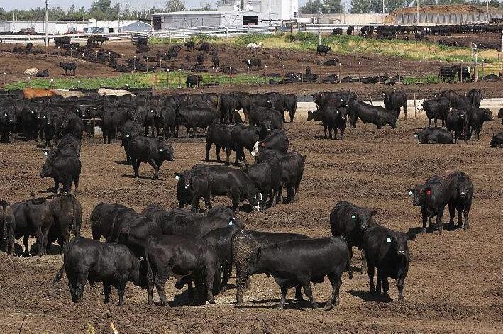 总投资3700万元的蒙源红农畜牧及产品养殖项目落