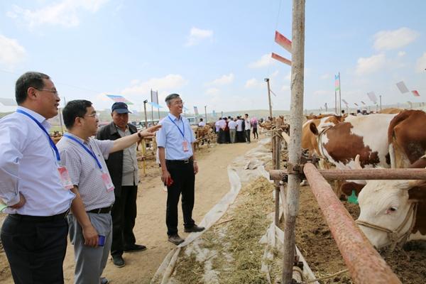宁夏:西部高端肉牛产业发展研究院建设进展顺利