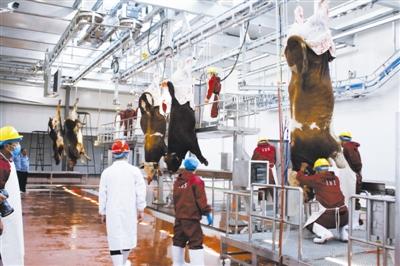 通辽:开鲁县肉牛产业化项目建成投产