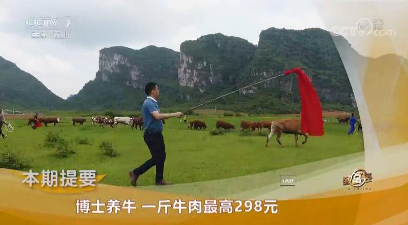 [致富经]清华博士杨远澄养牛 一斤牛肉最高298元