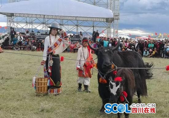 四川:颜值大比拼 最靓牦牛给主人赚了3万块钱