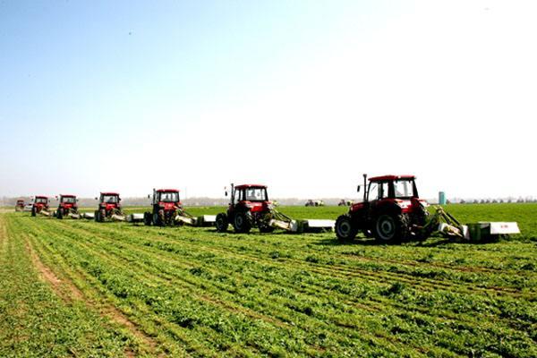 """黑龙江大庆529万亩牧草增产35%以上 产值""""跨""""过4"""