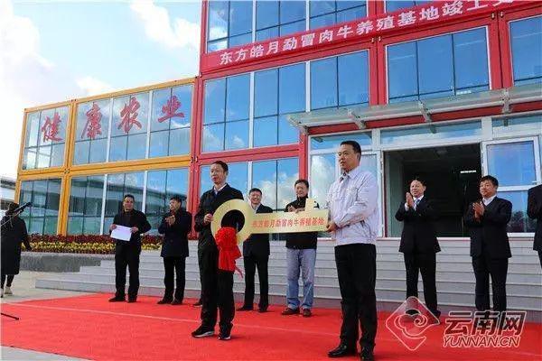 云南:年屠宰30万头肉牛,龙陵这个项目真牛!